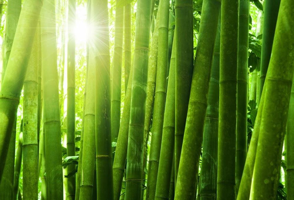 bambus garten bambus deutschland. Black Bedroom Furniture Sets. Home Design Ideas