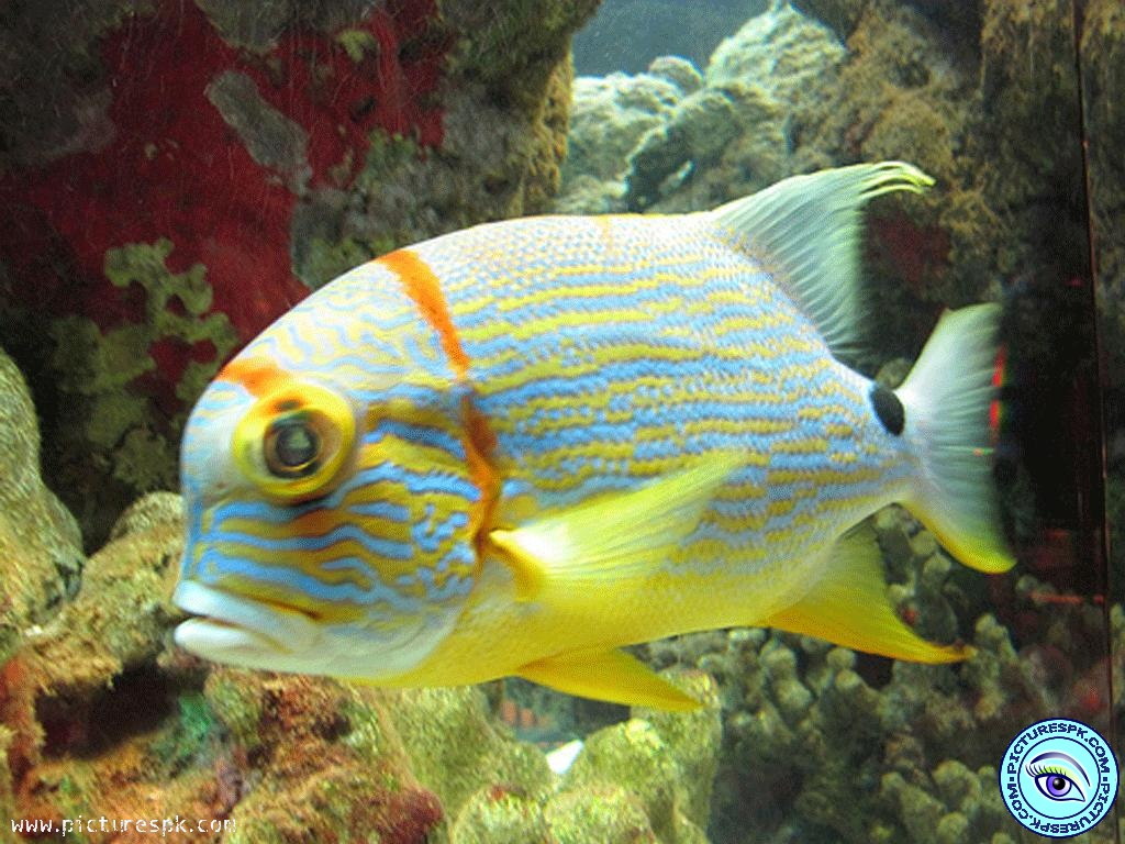 Http World Beautifulwallpapers Blogspot Com 2013 06 Beautiful Fish Wallpaper Html