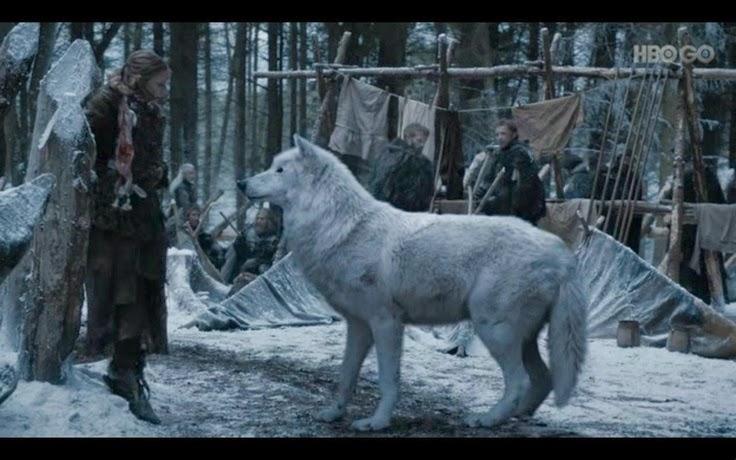 wolf genitalia