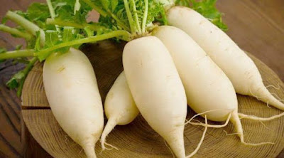 gambar lobak putih