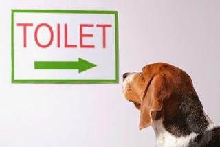 Nguyên nhân và cách sử lý tiêu chảy trên chó