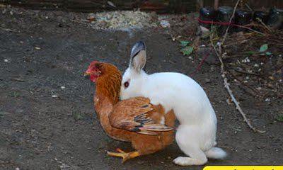 Agora eu descobri de onde vieram os ovos de pascoa