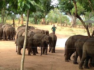 De volgende dag hebben we het Elephant Transit Home bezocht om daar ter plekke te filmen.