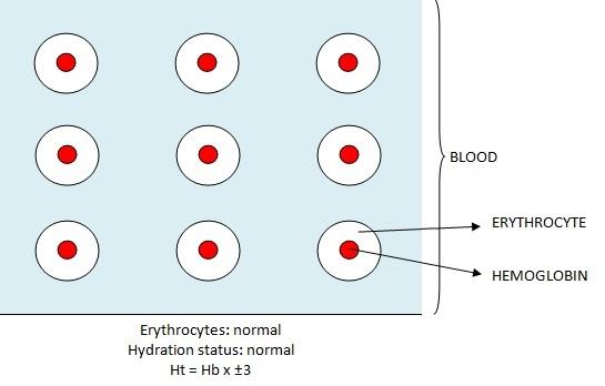 hematocrit and hemoglobin relationship