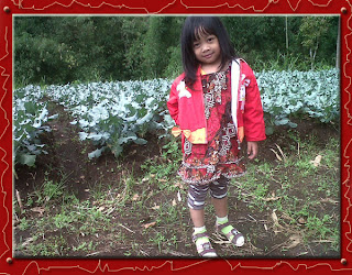 Emm, ini adalah ladang tanaman brokoli. Narsis dulu aaccchhh.....