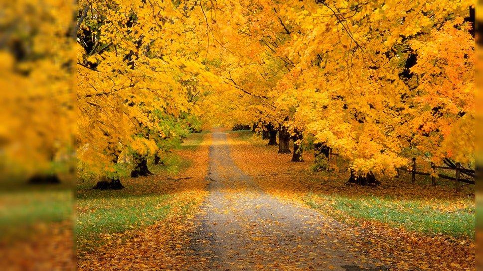 Картинки осень деревья голые серые тучи