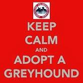 Gotta love a Sighthound