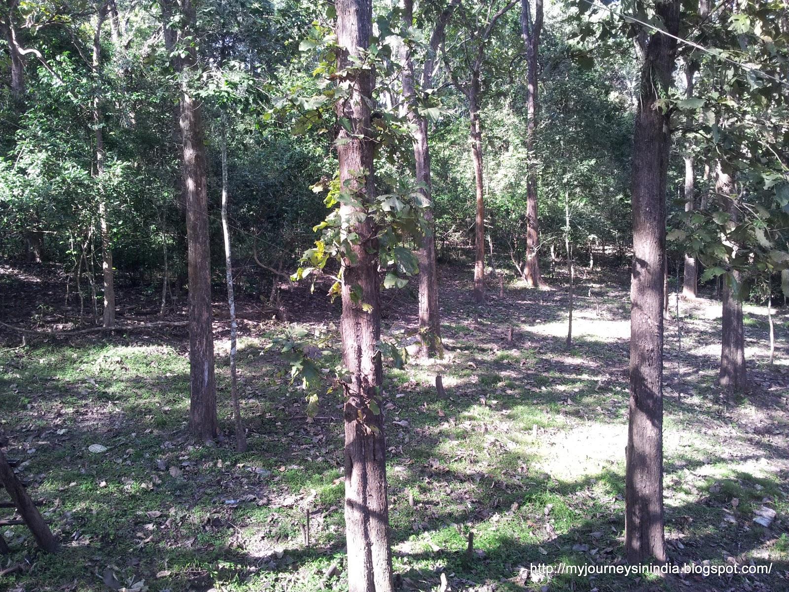 Treetop in Topslip