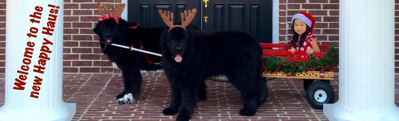 Welcome to the Happy Haus: A Newfoundland Therapy Dog and China Adoption Blog