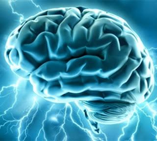 Ingin Meningkatkan Kemampuan Memori? Cobalah Memanjat Pohon