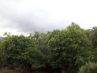 ciel nuageux sur des châtaigniers de Serra di Scopamène en Alta Rocca
