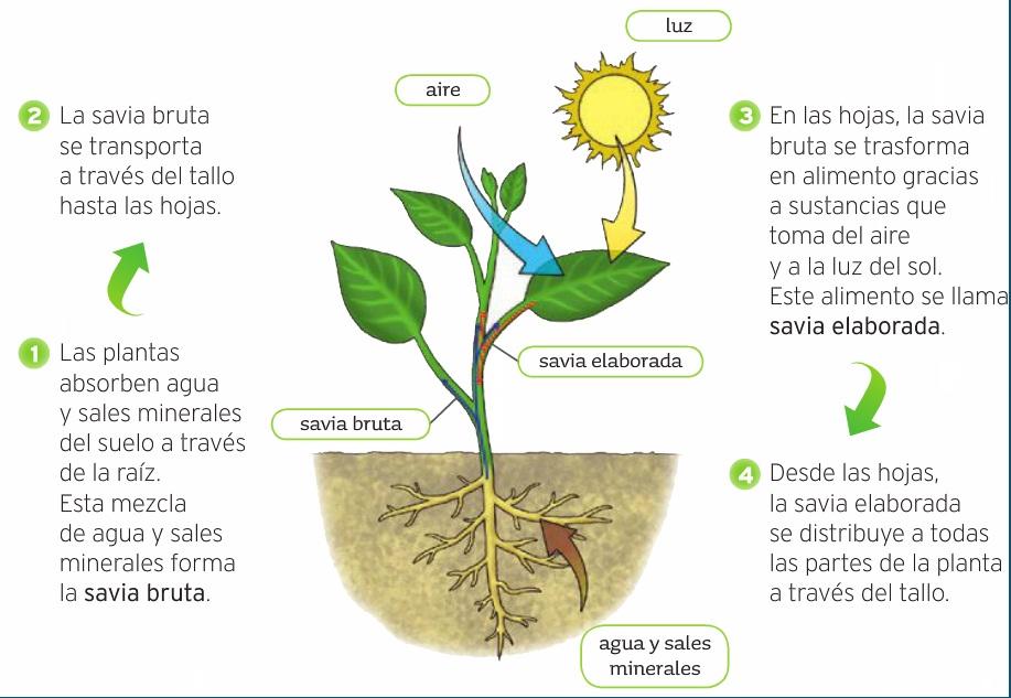 Importancia del atp en la fotosintesis 92