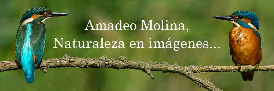 Amadeo Molina , Naturaleza en imágenes ...