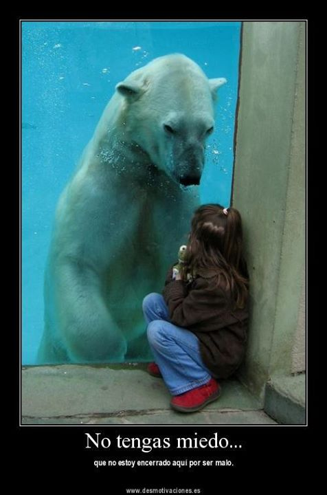 Animales Tiernos Inspiran: ver graciosas imagenes con frases ...