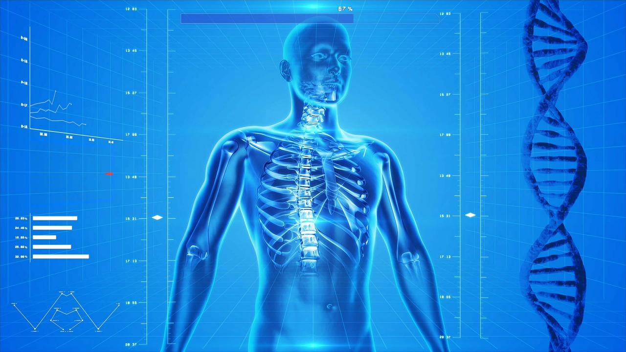 MavirieArt: Estructura del Cuerpo Humano: Caja Torácica