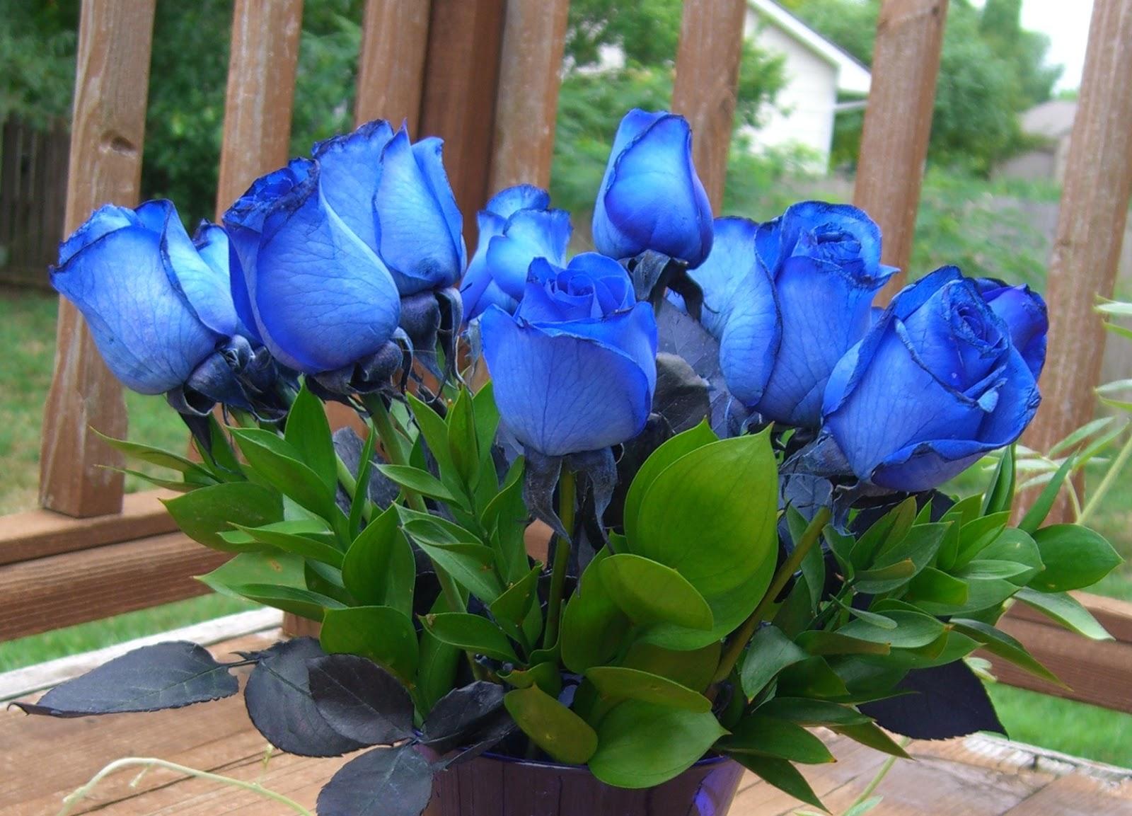 Prairie Hime The Bluest Blue Ever