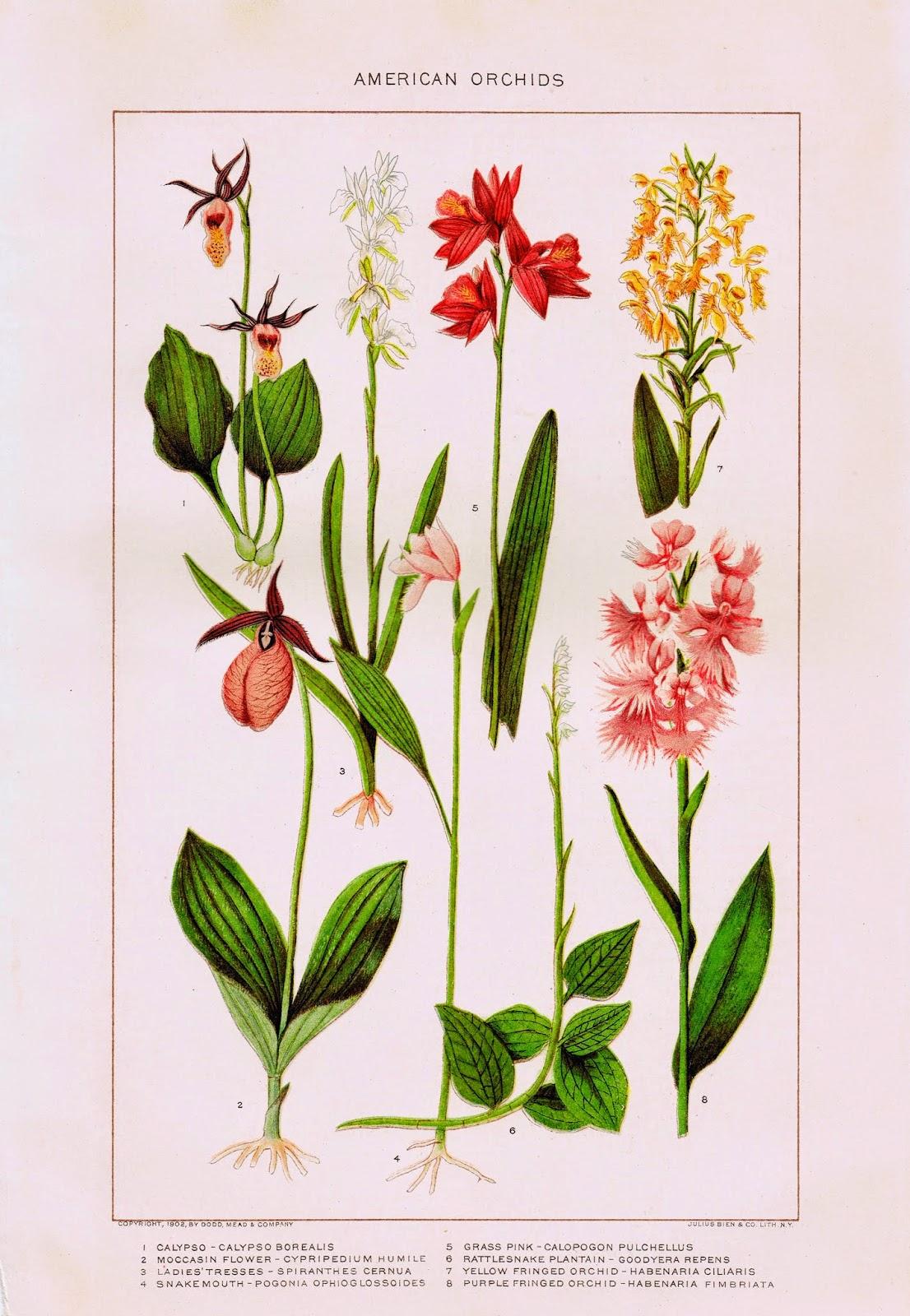 Nature Flowers Printable - Orchids via knickoftimeinteriors.blogspot.com