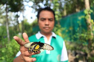 Indahnya Belasan Spesies Kupu-kupu di Alian Butterfly Park