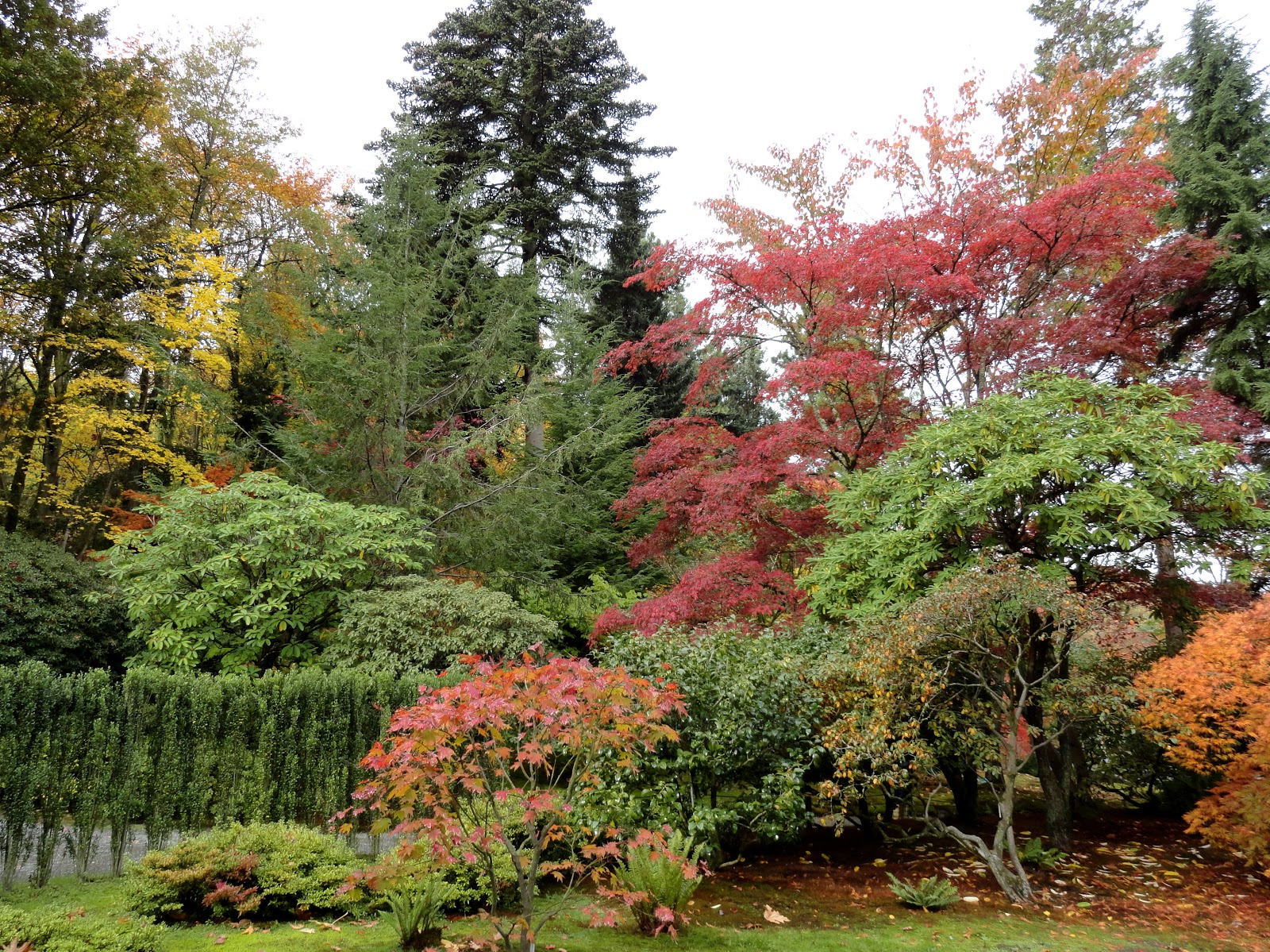 Exotic Japanese Garden Design Ideas - Living Room Ideas
