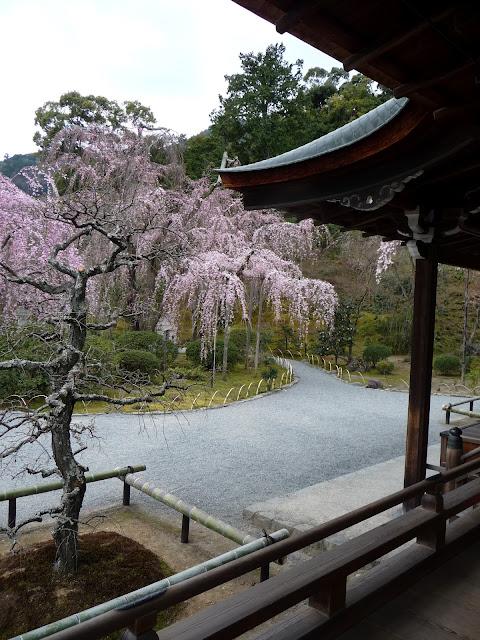 sakura zen