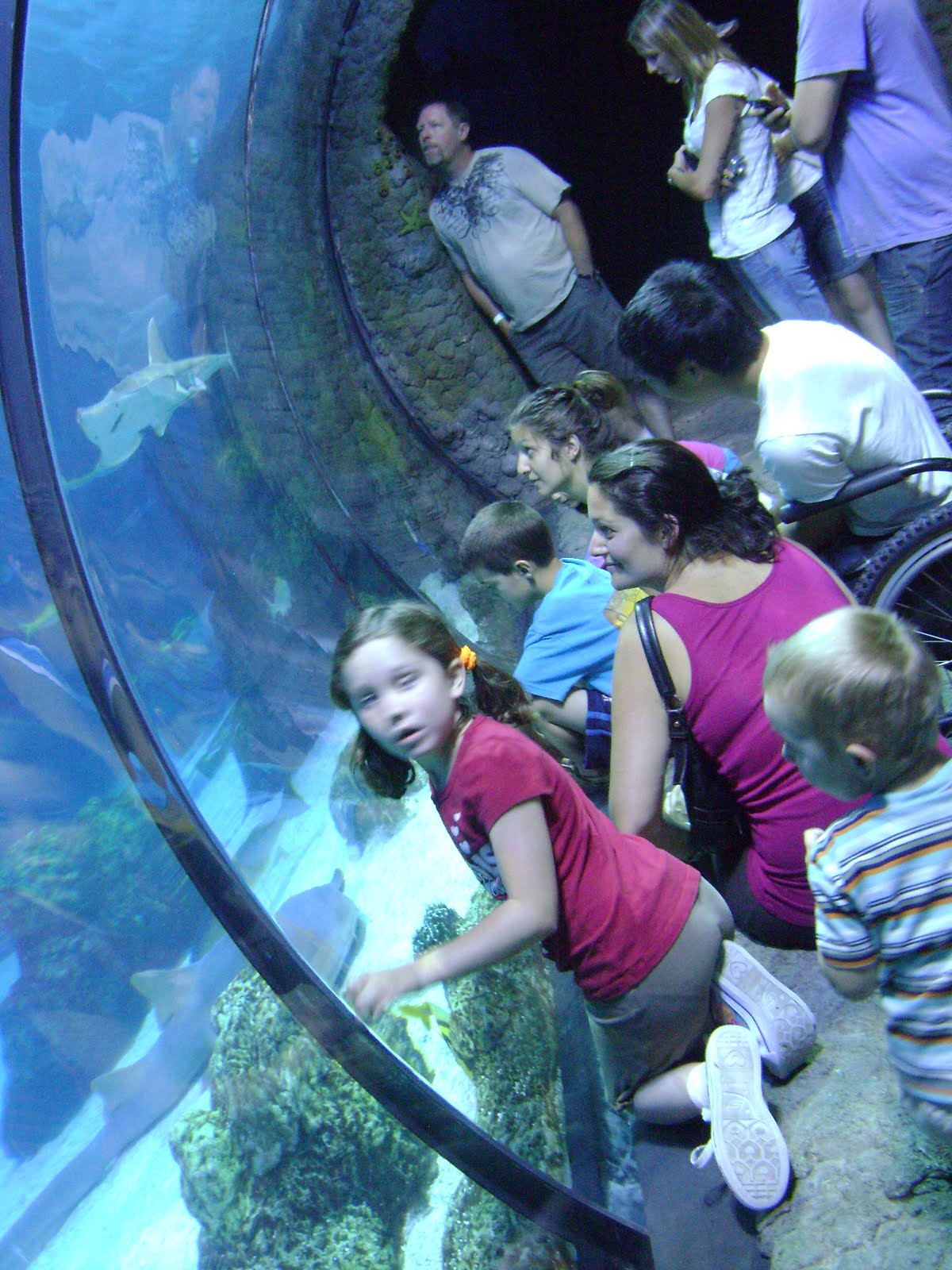 Denver aquarium coupon code