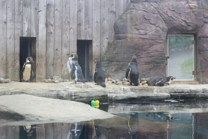 Penguins at the Seal Sanctuary