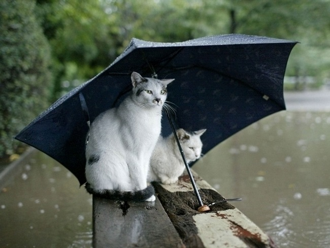 Image result for Rainy Day Thursday