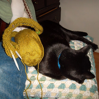 Knitting on circular needles, draped across human's legs and the back of a sleeping cat
