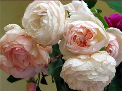 bunga romantis 2