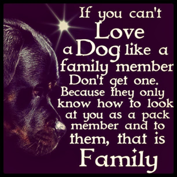 If You Can't Love a Dog...