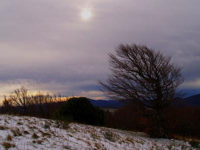 Monte Aquilone: faggio