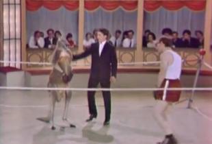 El día que Woody Allen boxeó con un canguro