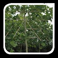 Prachtige bomen bij...  (klik op plaatje)