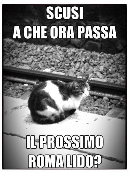 Gatto in attesa della Roma-Lido