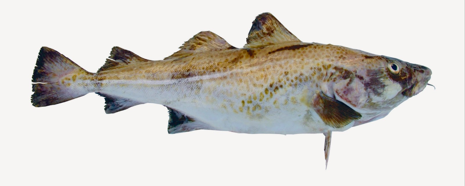 cod-fish-recipe