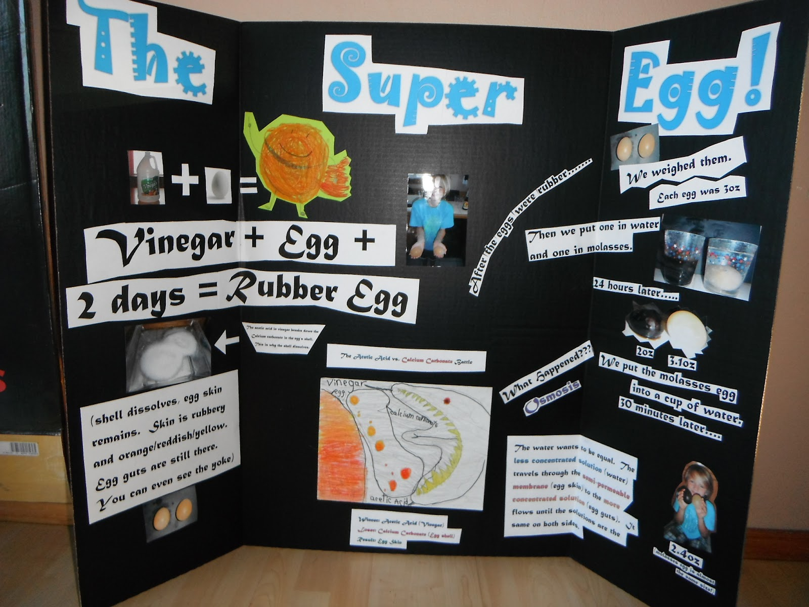 science fair projects with eggs Eggshells are certainly no substitute for diamonds, but you may be surprised at  just how strong they really are in this experiment we'll explore the strength of.