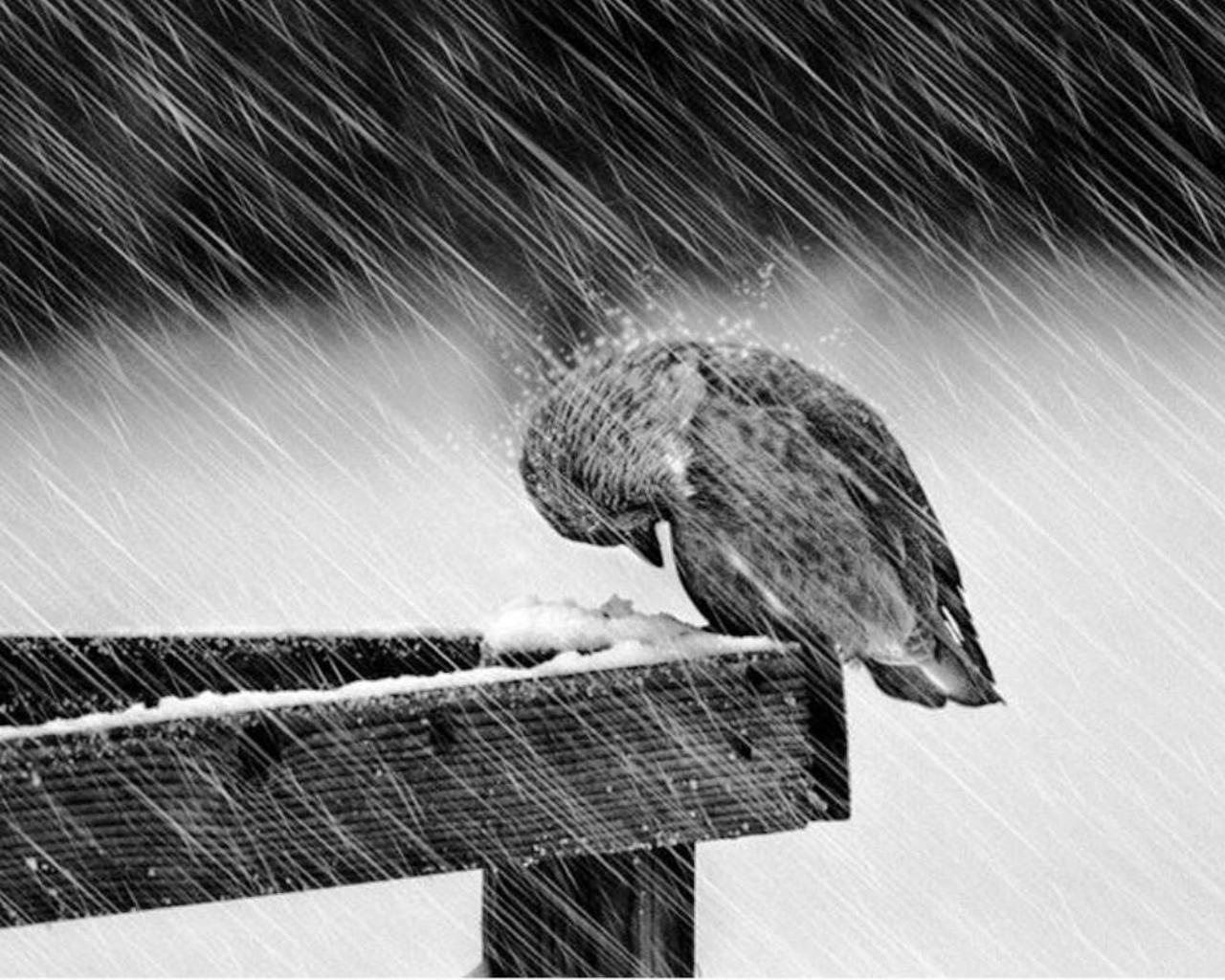 Bộ ảnh cơn mưa buồn miêu tả những nỗi buồn sâu lắng và lãng mạn nhất