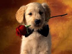 Te dou uma rosa....