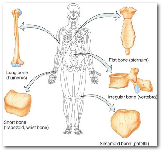 Enfermedades de Músculos y Huesos, prevención,