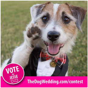 Please Vote for Jesse in #TheDogWedding Photo Contest on Instagram and Facebook below♥