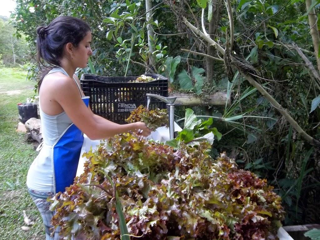 Primeiro mercado de produtos orgânicos do estado será inaugurado na Ceasa-foto Paulo Filgueiras