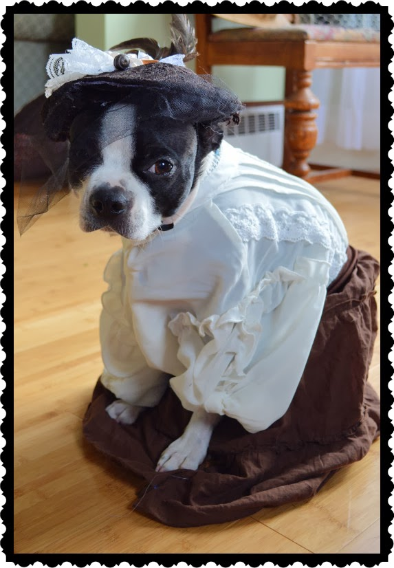 Marvelously Messy Steampunk Dog Costume And Pumpkin