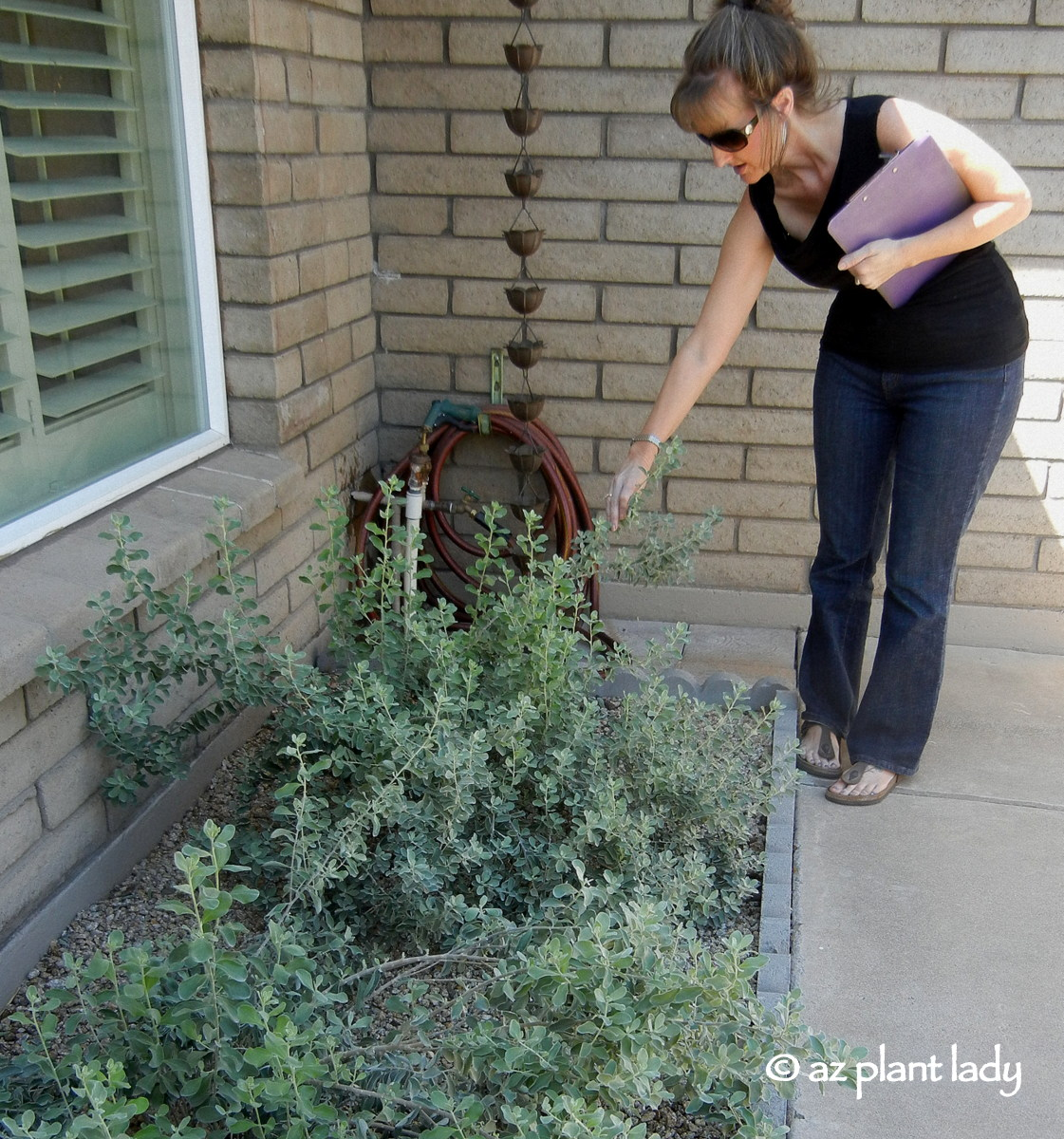 About az plant lady ramblings from a desert garden for Garden consultant