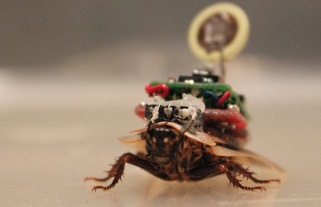 Robo_Roach - Cyborg Cockroaches - Science and Research