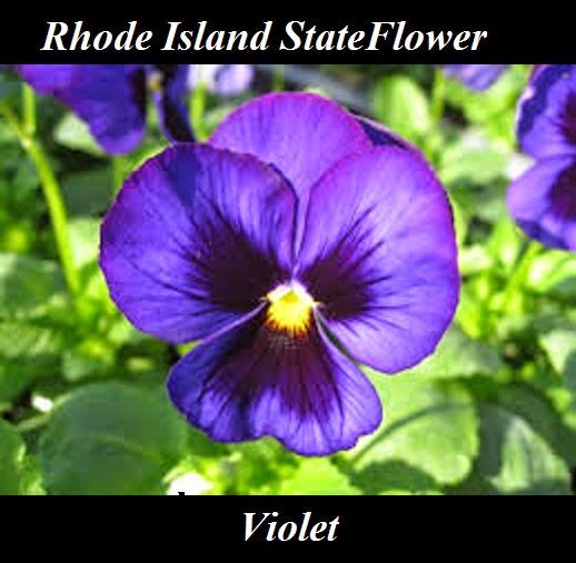 Rhode Island Metal Detecting Club