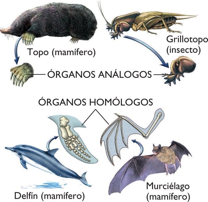 Evolucion biologica: abril 2011