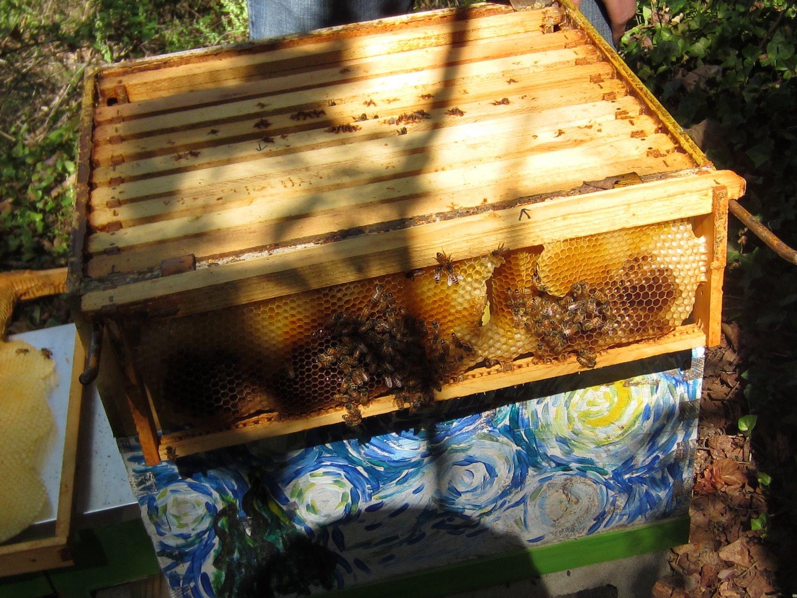 linda u0027s bees consolidating a hive as winter preparation