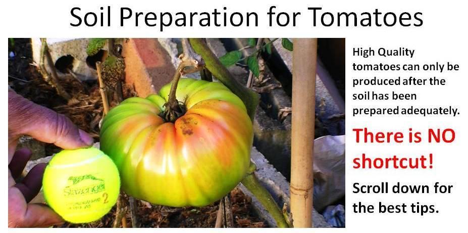 Vegetable Garden For The World Soil Preparation For Tomatoes