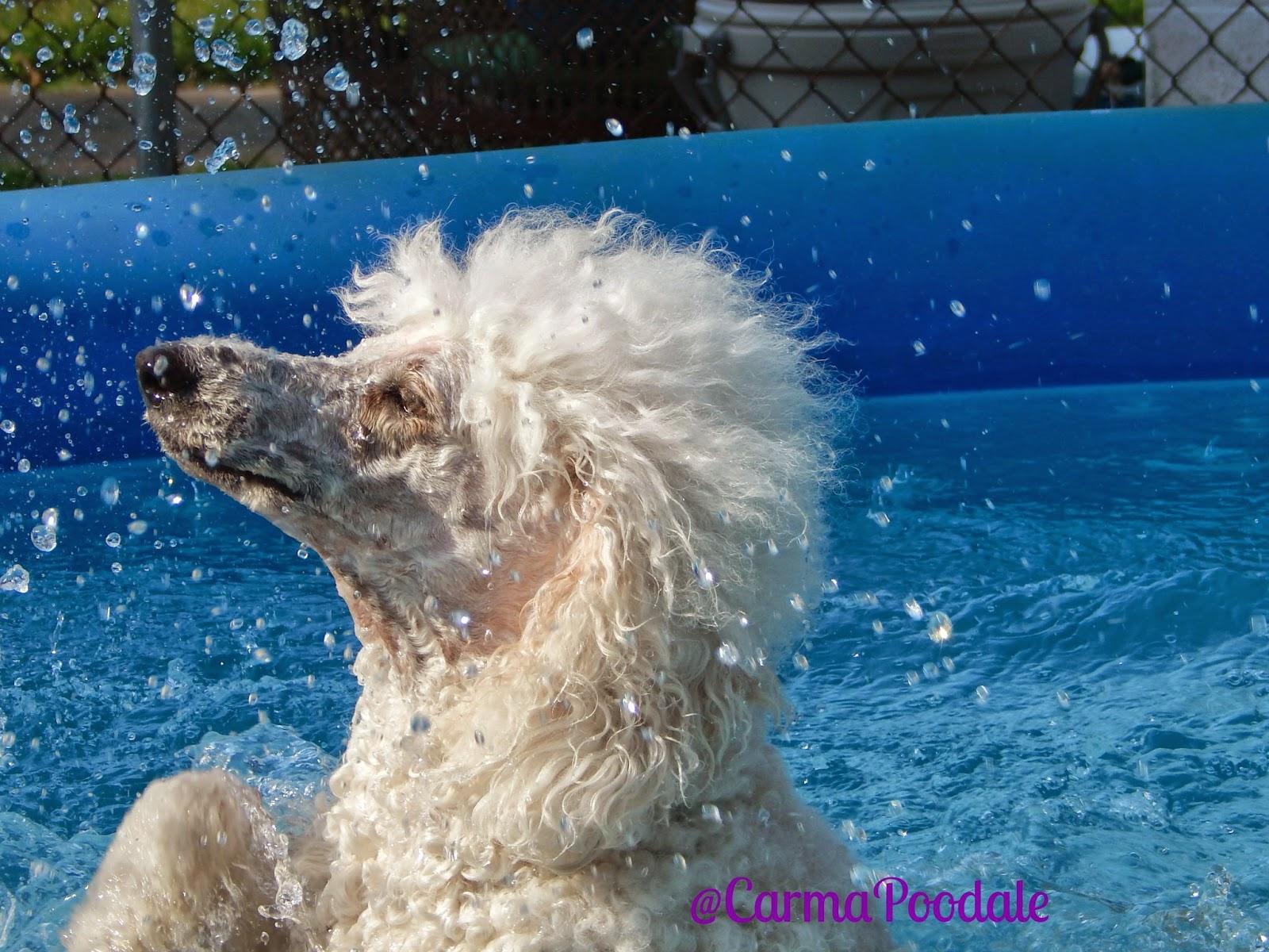 Carma Swimming