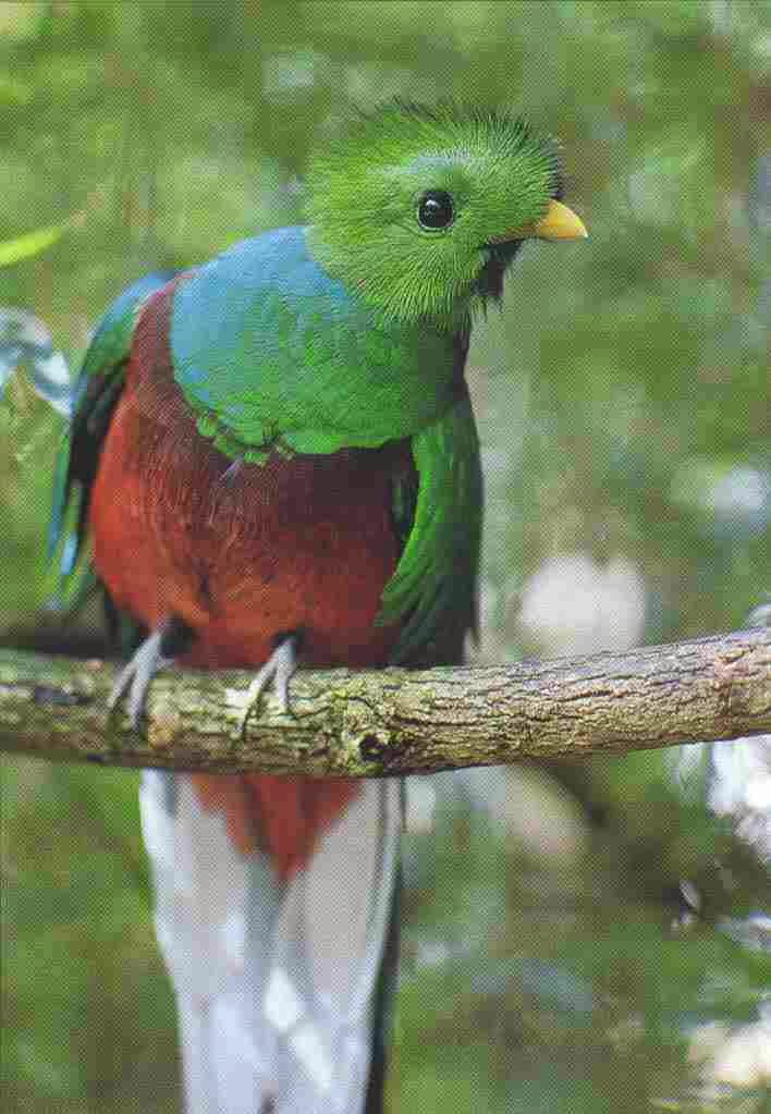 Quetzal Mayan Symbol Ancient Cosmic ...